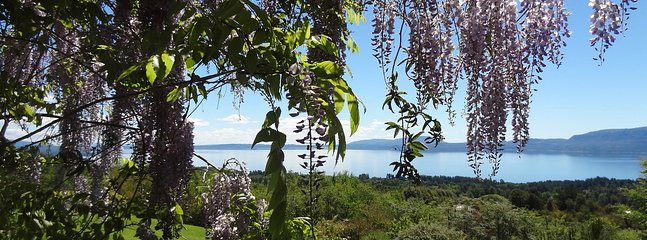 Wisteria arbor with lake view