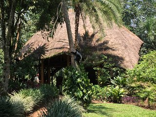 Kibale Forest Camp one of the best choice for a great experince in Uganda