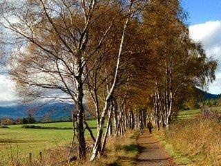 Walk east along former railway line