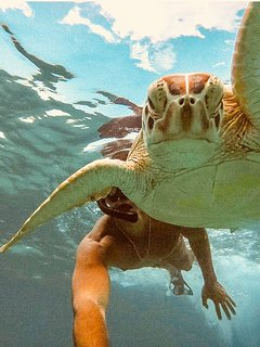 Best snorkeling and scuba in the Carribean. Crash or beat