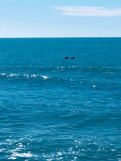 You often see dolphins from our condo.