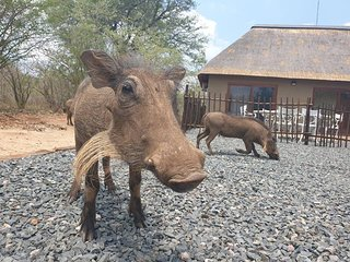 Bliss Wildlife Escape - Safari Holiday Home