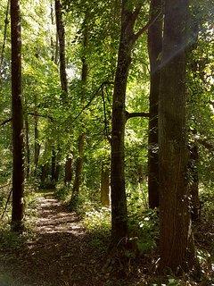 Randonnée privée dans les bois du Château de Bonneau.