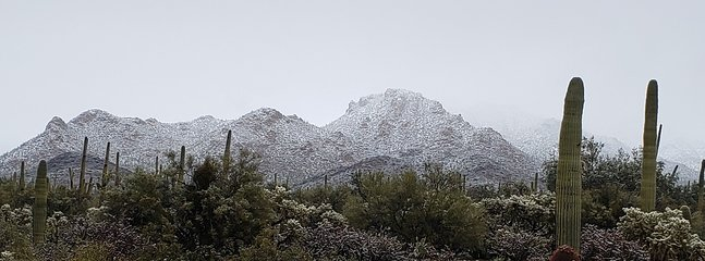 Tucson snow once every decade, backyard view.