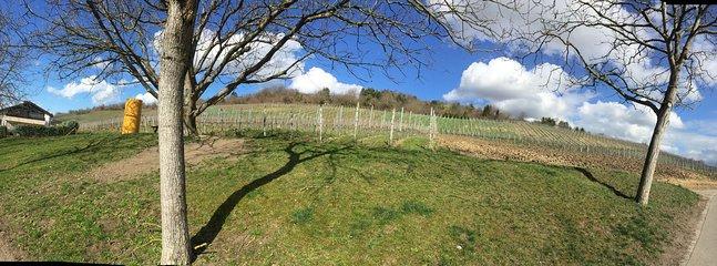 Foto de gran angular de los muchos viñedos en el 'Weinberg' justo encima del BnB