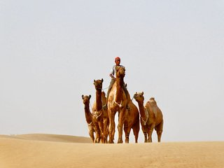 A night in the khuri thar desert and CAMEL safari tour