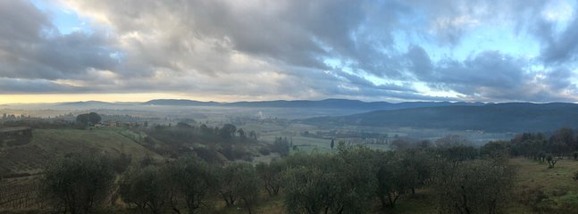 Panoramic view. Our olive grove in the immediate vicinity