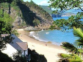Sunny Cove 4