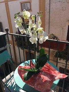 Balcon et orchidée