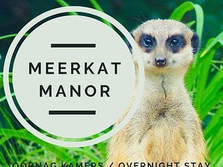 Mozat in Meerkat Manor