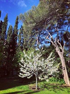 Le verger au printemps