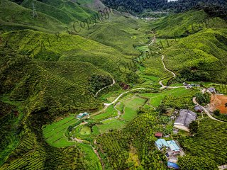 Cameron Highlands Love-to-Stay
