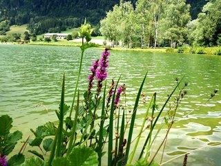 Blick auf den Talhof-See