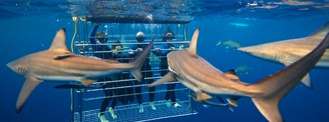 Numerous Shark cave diving venues within 10km