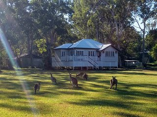 Lake Weyba Noosa Lodge & Friendly Kangaroos
