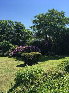 Gardens at the rear of Burlington Mansions