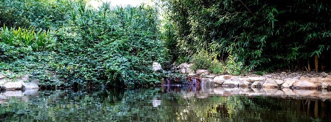 La tranquillité de l'eau dans le jardin secret.