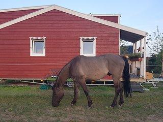 Natur und Pferde
