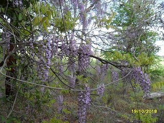 Gold Trees Cottage Armidale NSW2350