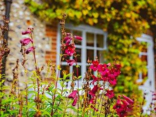 Distinctive vine in Autumnal colours.