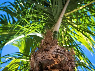 Siesta Palms at Siesta Key Inn-#1C Coconut Palm