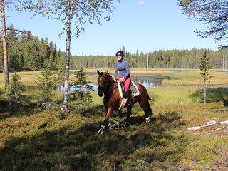 Das Malin Resort liegt in der idyllischen Natur Lapplands