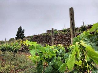 Casa Finca Paisajes del Vino - Wine landscapes house