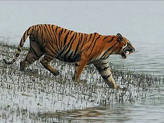 Sundarban Tour And Travels
