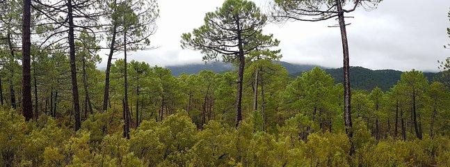 'Zafiro' está situada en el corazón del Parque Natural de Los Calares del Mundo y de la Sima.