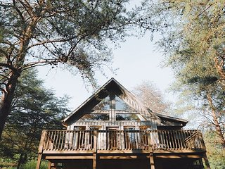 Pine Cone | Hocking Hills