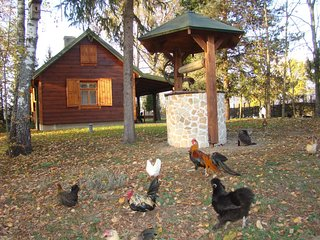 Cottage to rent in Lilac Organic Farm in Bialowieza Forest