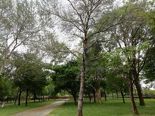 Habitacion matrimonial con vistas areas verdes
