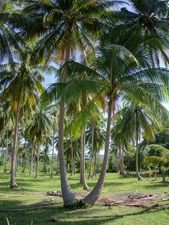 Area idyllically covered in Palm trees