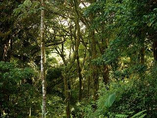 Monteverde Canopy House