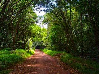 One day tour karura forest