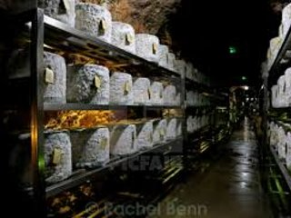 Cave aged Cheddar cheese - stored in Wookey Hole Caves, nr Wells