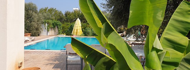 Lovely Pool is Surrounded with Fruit and Olive Tree.