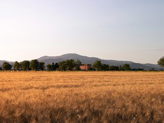 Ginestra - Azienda agricola Il Pescinone sulla Costa degli Etruschi