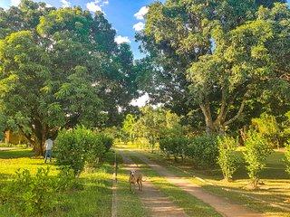 Casa campestre para ate 23 p. a 4km de AguasClaras