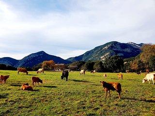 La Plana: Ubicada en un (PEIN) Pla d'Interés Natural de l'Alta Garrotxa