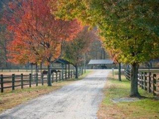 Naturaleza, aire libre, árbol, vegetación, camino