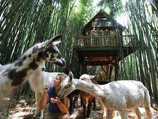 Atlanta Alpaca Treehouse in the Bamboo Forest