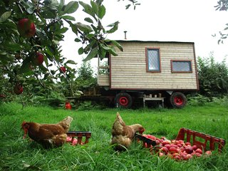 Shepherd's Hut | in a cider orchard | Wye Valley | surrounded by nature