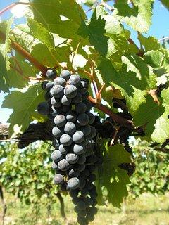 Notre propriété viticole est désormais certifiée en culture BIO .location de vacances en Périgord