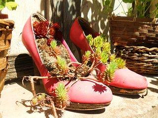 OUBLIEZ vos chaussures a La Roseliere