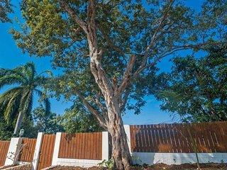 Trees around Nianna Eden