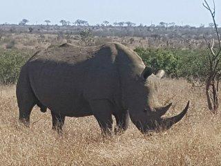 Indaba Kruger Safari Villa - luxury on the banks of the Crocodile River