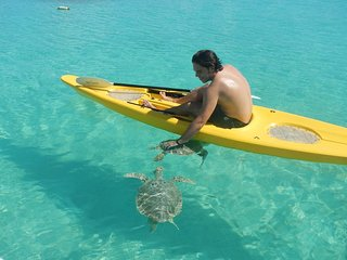 Our guests love kayaking with turtles