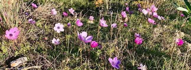 Wild winter flowers