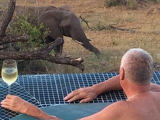 Buffalo Brooke - Mjejane, Kruger National Park